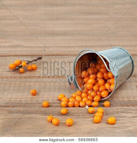 Organic Sea-buckthorn