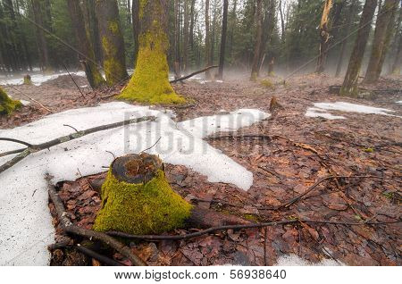 Spring Thaw With Fog 1