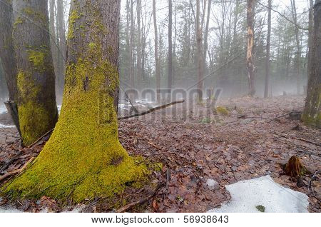 Spring Thaw With Fog 2