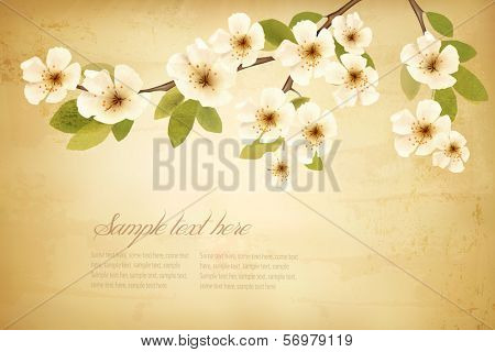 Vintage background with blossoming tree brunch and white flowers. Vector.