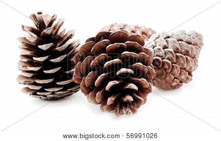 Group Of Pine Cones Isolated On White Background