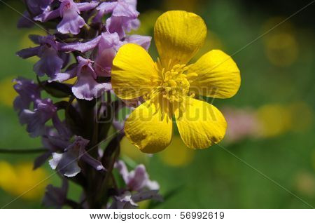 Flowers: Violet And Yellow