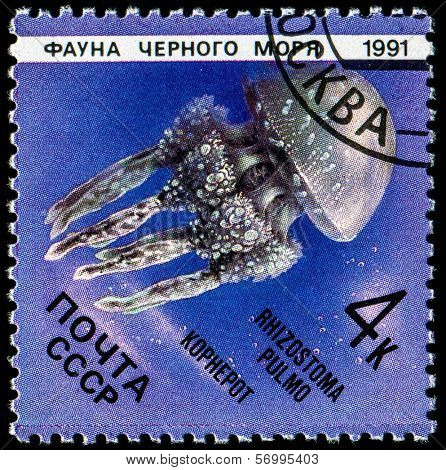 USSR - CIRCA 1991: A stamp printed in the USSR showing Medusa (Rhizostoma pulmo kophepot) circa 1991