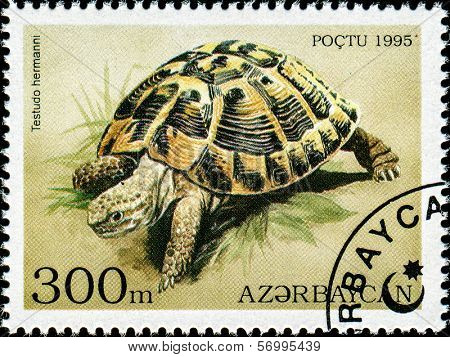 AZERBAIJAN - CIRCA 1995: A stamp printed in Azerbaijan shows an Indian Star Tortoise, Geochelone elegans which is found in India and Sri Lanka, circa 1995.