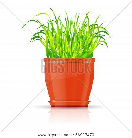 Orange flowerpot with green grass