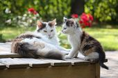 picture of puss  - Adorable kitten resting with his mother in the garden - JPG