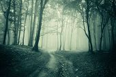 stock photo of eerie  - Road trough a eerie spooky creepy dark forest with fog  - JPG