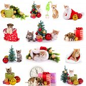 stock photo of christmas puppy  - Collage of kittens and puppy with Christmas decorations isolated on white - JPG