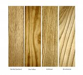 stock photo of elm  - real wood samples of Oak - JPG