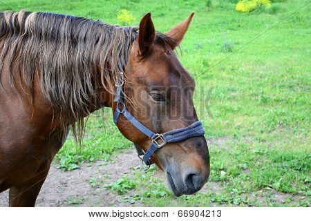 Brown horse in the forest