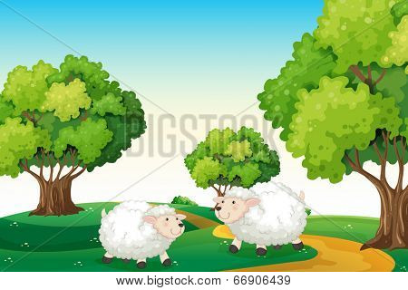 Illustration of the two white sheeps at the hilltop