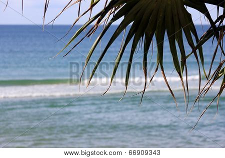 Soft focus beach waves with Palm Silhouette