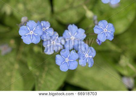 Blue Flowers In Spring