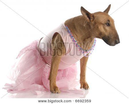 Bull Terrier In Pink Tutu