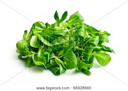 corn salad, lamb's lettuce on white background
