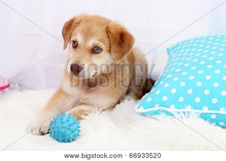 Cute beige puppy playing with ball on white carpet, on light background