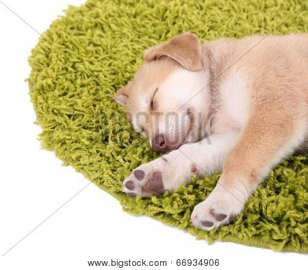 Little cute Golden Retriever puppy on green carpet, isolated on white