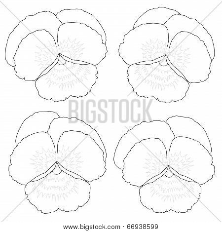 Pansy Outline Coloring Picture
