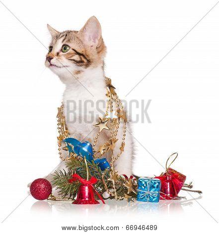 Celebrating Kitten