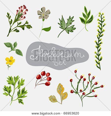 Herbarium Set. Different Plants.