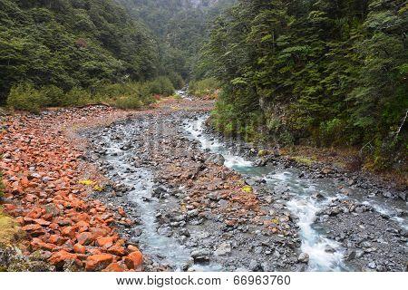 Arthurs Pass Red Rocks, River & Beech Trees
