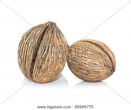 Othalanga - Suicide seed