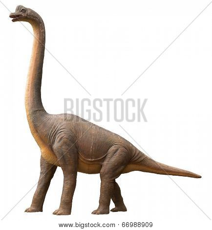 Life-like sauropod dinosaur which was a high browser and herbivore living during the Jurassic period, isolated on white