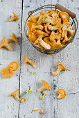foto of chanterelle mushroom  - Forest chanterelle mushrooms in a iron basket - JPG