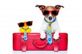 picture of carry-on luggage  - dog traveling with yellow plastic duck on top of luggage - JPG