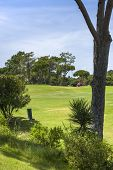 image of vilamoura  - Green golf course and blue sky in south of Portugal - JPG