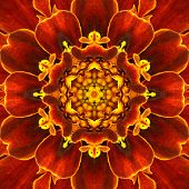 picture of kaleidoscope  - Red Mandala Concentric Flower Kaleidoscope with Yellow Center - JPG