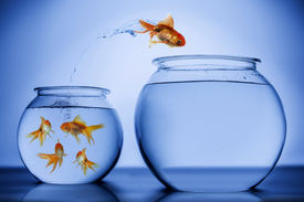 picture of school fish  - Fish happily jumping from a small bowl with a school of fish to an empty bigger bowl - JPG