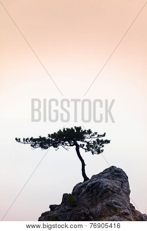 Silence - A Little Tree on a Little Rock