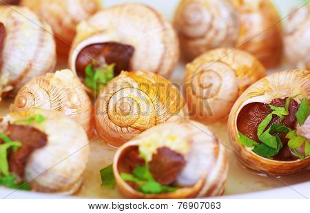 Abstract food background, tasty prepared escargot with garlic sauce, traditional French delicatessen, small cooked snails in the shells, luxury nutrition concept