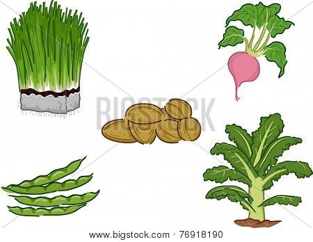 Illustration Featuring Different Vegetables Classified as Superfoods
