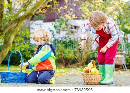 Two Cute Little Boys Harvesting Apples In Home's Garden