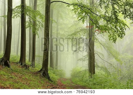 Early autumn forest on a foggy day