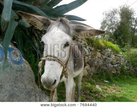 Donkey Donkey Silly Donkey