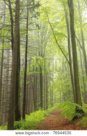 Spring deciduous forest