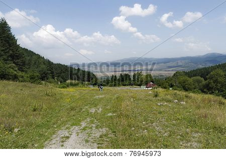 Green forest and flower field in Rila mountain