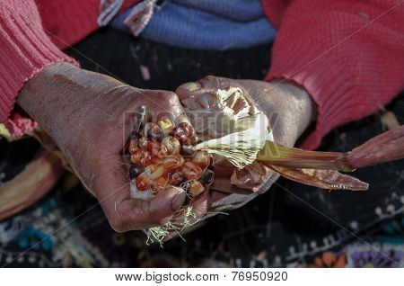 Countryman shows coloured corn in his hands