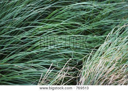 grass STOCK
