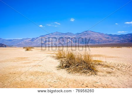 Dry Brush In Death Valley