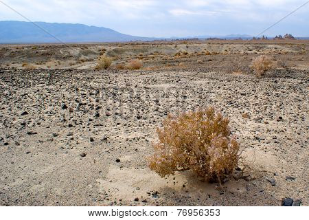 Mojave Desert Desolation