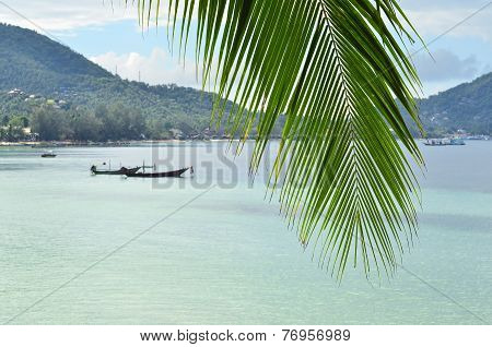Tropical Paradise - Closeup Of Palm Leaf And Turquoise Sea Water With Longtail Boats And Green Hills