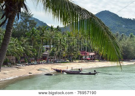 Tropical Paradise - Longtail Boats Nearby Sandy Beach And Closeup Of A Palm Leaf