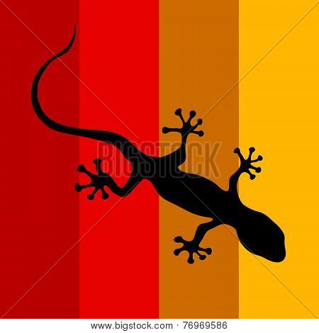 Salamander On A Color Background