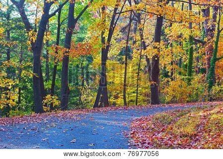 Colorful foliage of deciduous trees along the park trail.