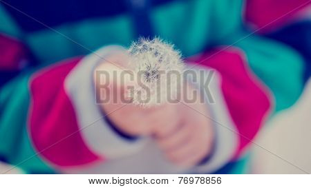 Child Holding Dandelion Clock
