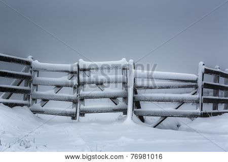Frozen Wooden Fence